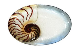 Nautilus Glass Plate